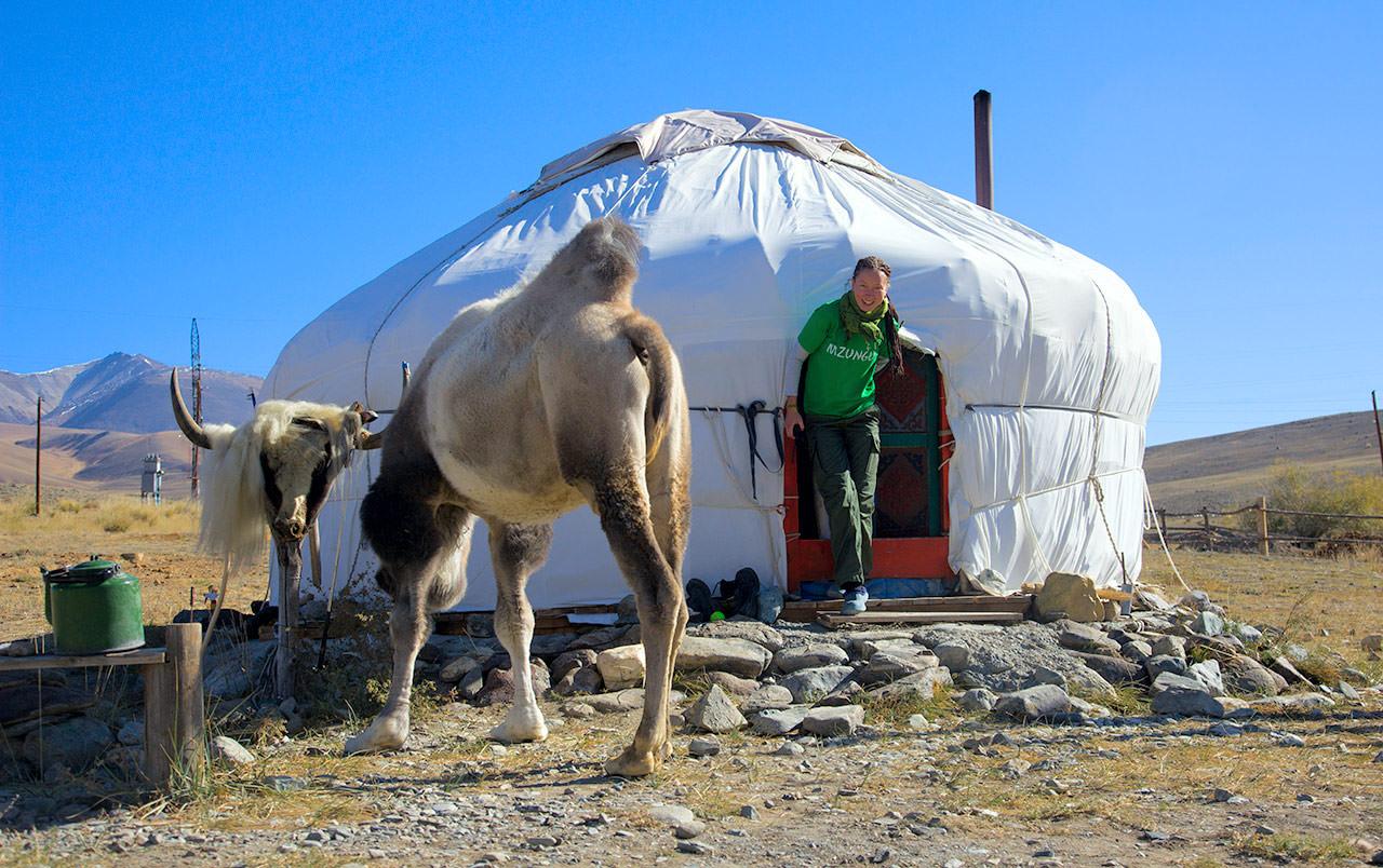 верблюд и юрта