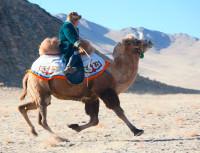 наездник-верблюд