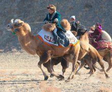 скачки-на-верблюдах