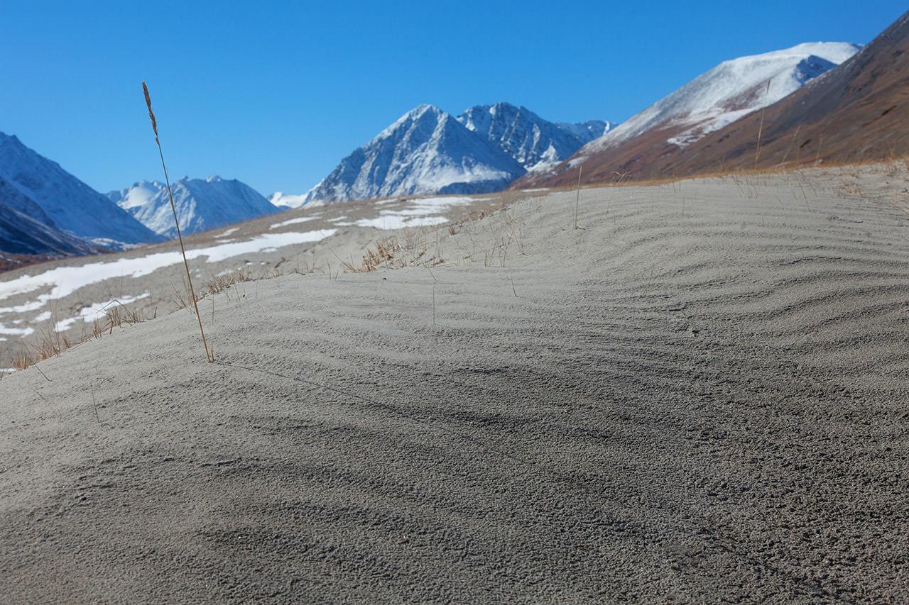 песчанные дюны на алтае