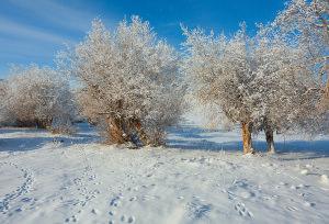 Зима в Туярыке