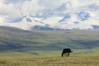 конь на Укоке