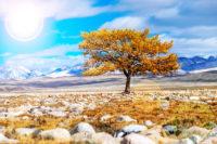 Шаман дерево в долине Юстыт
