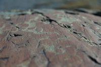 алтайские петроглифы
